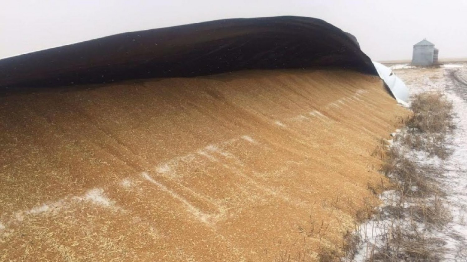 Farmer says slashed grain bags no laughing matter -From CBCNews.ca